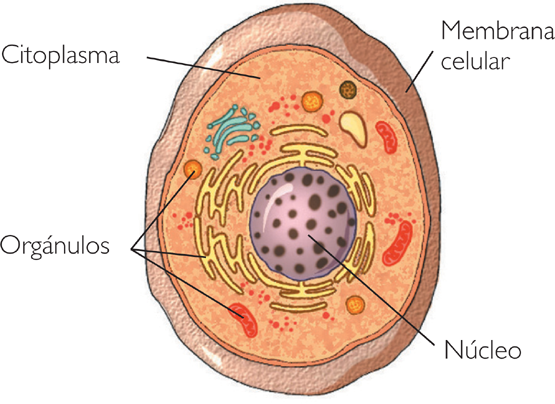 O Relacionamento entre as Células e seu Ambiente