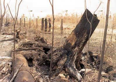 A devastação das florestas