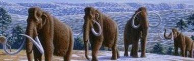 primeiros-mamiferos