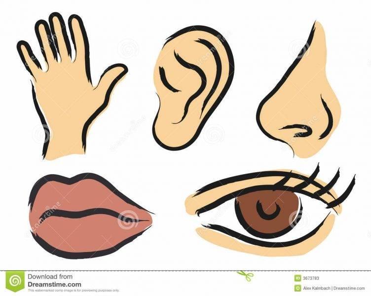 Percepção Sensorial