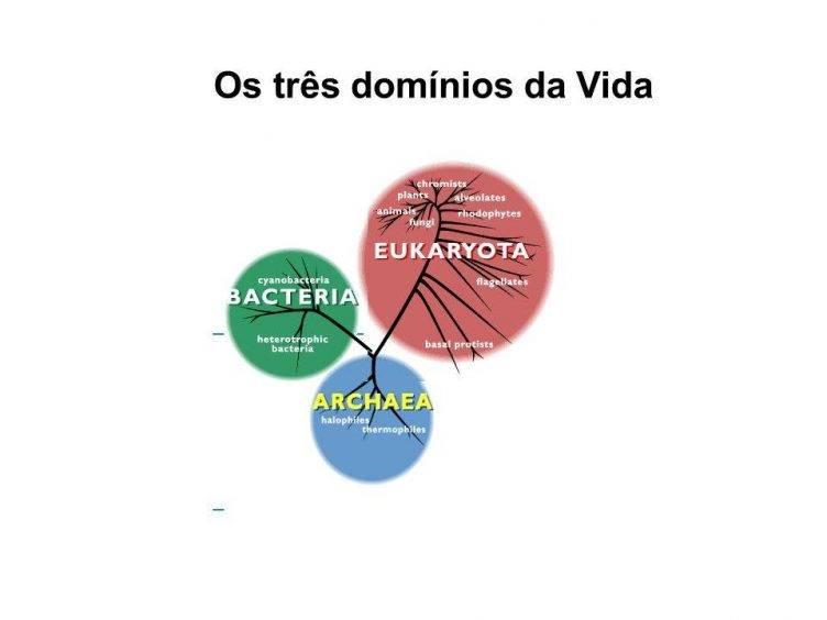 Três domínios