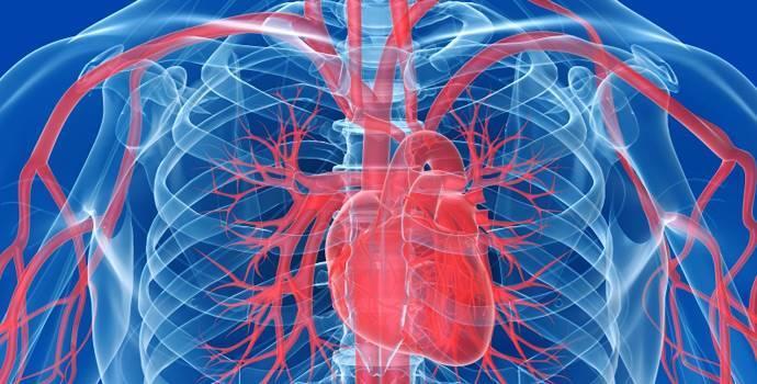 Artérias – Definição, Classificação e Pressão Arterial