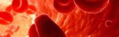 tecido-hematopoietico