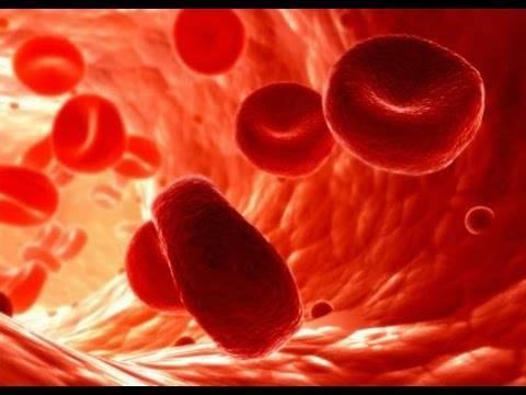 Sistema Hematopoiético